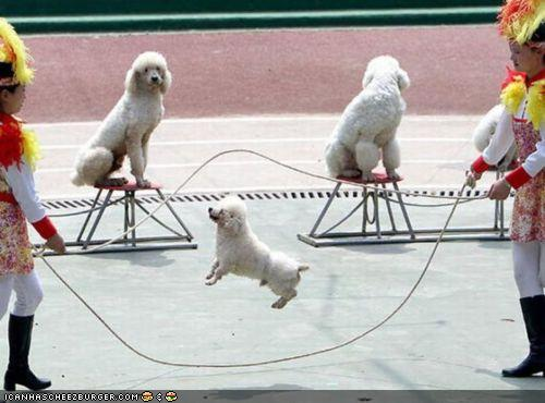 dog jumping rope (1)