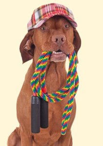 dog jump rope