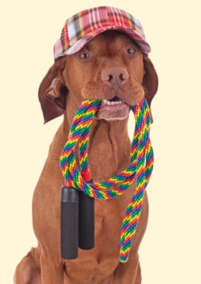 how to teach a dog to jump rope