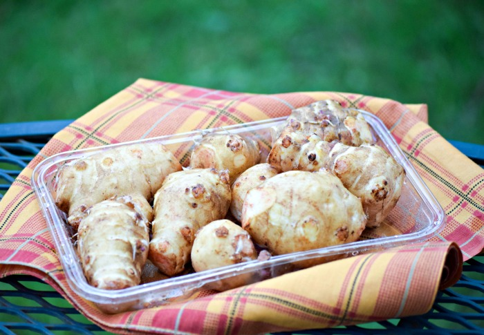 Sunchokes are a tuberous root also called Jerusalem Artichokes .