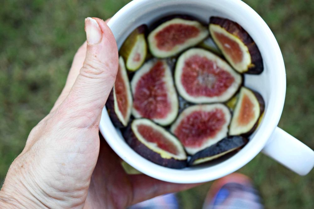 Figs in Mug