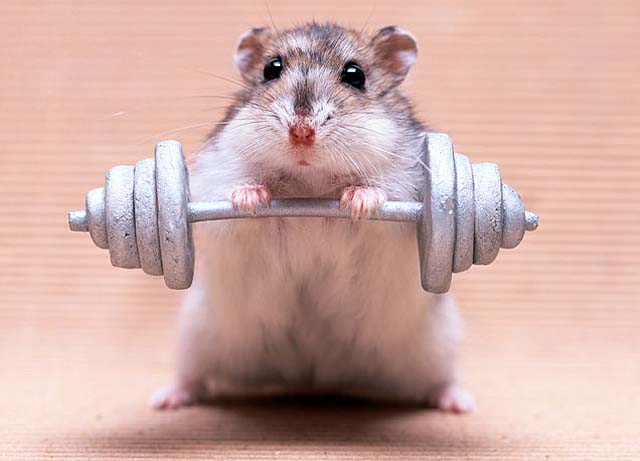 mouse-lifting-weight