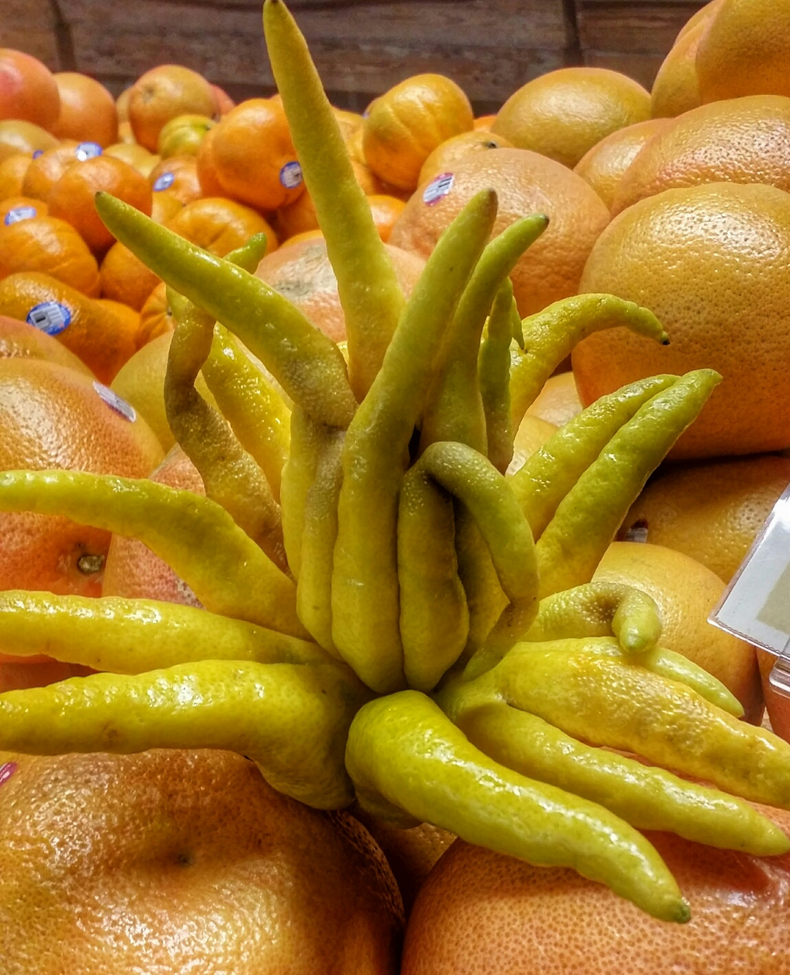 Buddha's Hand - exotic citrus fruit