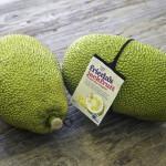 Ginormous Jackfruit, Everything You Need to Know