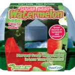 watermelon growing kit