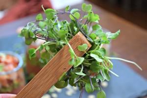 asian micro greens